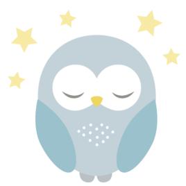 Bagoly falmatrica – kék